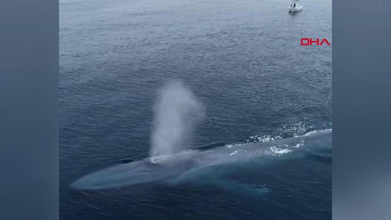 Pasifik Okyanusu'nda görülen mavi balina balıkçıları korkuttu
