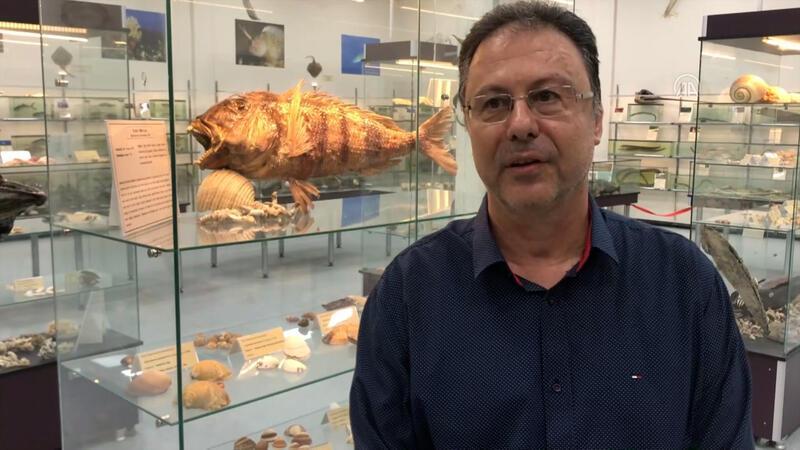 """Prof. Dr. Tevfik Tansel Tanrıkul: """"Somon balığının  Kovid-19 taşıyıcısı olduğuna dair bilimsel kanıt yok"""""""