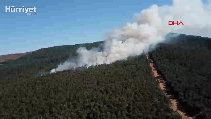 Kayışdağı'nda ormanlık alanda yangın çıktı