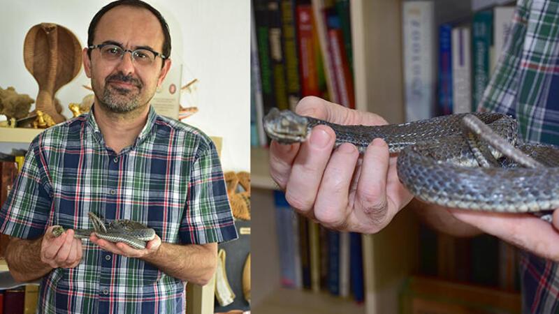 Prof. Dr. Dinçer Ayaz: Yılanların deprem habercisi olduğuna dair bilimsel veri yok
