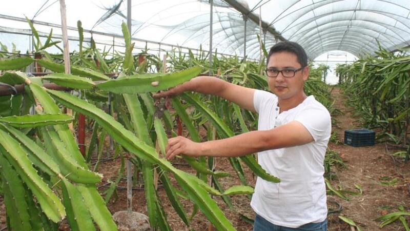 Ejder meyvesine talep arttı, çiftçi fide siparişlerine yetişemiyor