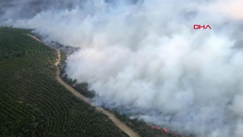 Forest fire erupts in Çanakkale's Gelibolu