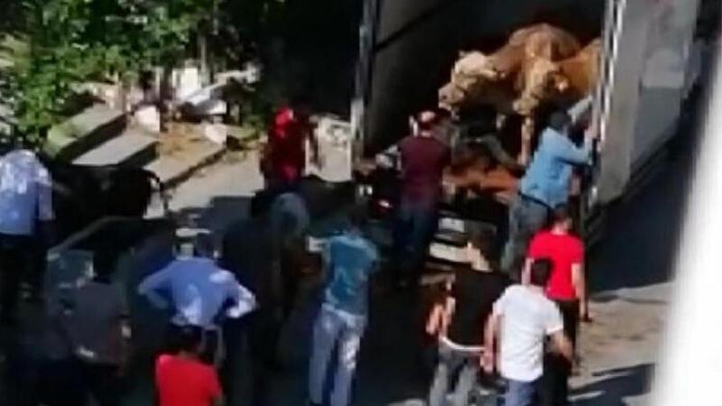 Sultangazi'de kapalı kasa kamyonette havasız kalan 4 kurbanlık öldü