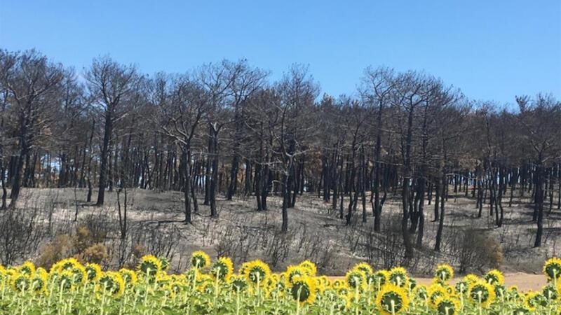 Gelibolu'daki yangının izleri yol kenarından böyle görüntülendi!