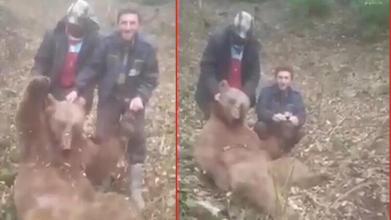 Trabzon'da vurdukları ayıya işkence eden avcılar kamerada