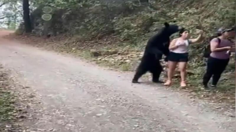 Meksika'da parkta karşılarına çıkan ayı ile selfie çektiler