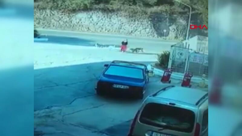 Muğla'da yolda yürüyen bir kadın köpeklerin saldırısına uğradı