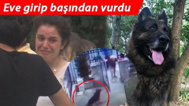 Sarıyer'de eşini ısıran köpeği silahla vurdu! O anlar kamerada