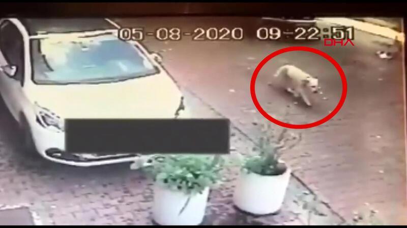 Beşiktaş'ta tepki çeken görüntü; köpeği ezdi, kaçtı