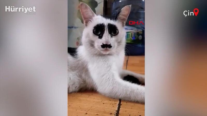 Çin'deki 'üzgün kedi', sosyal medyada ilgi odağı oldu