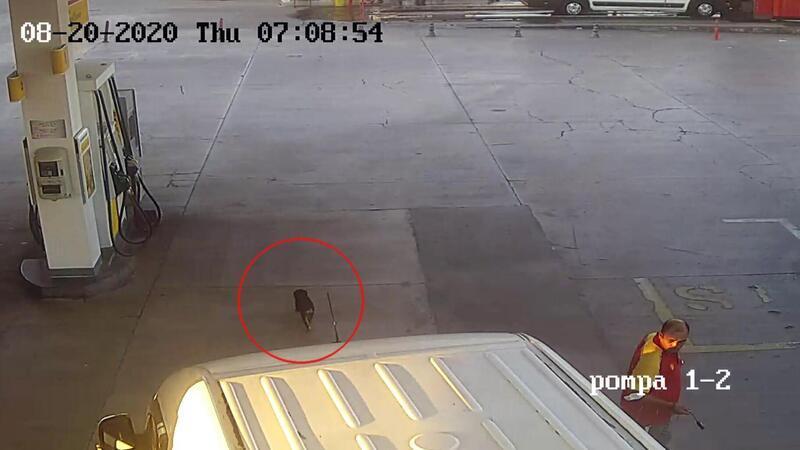 İzmir'de kan donduran görüntü! Yavru köpeğe çarpıp böyle kaçtı