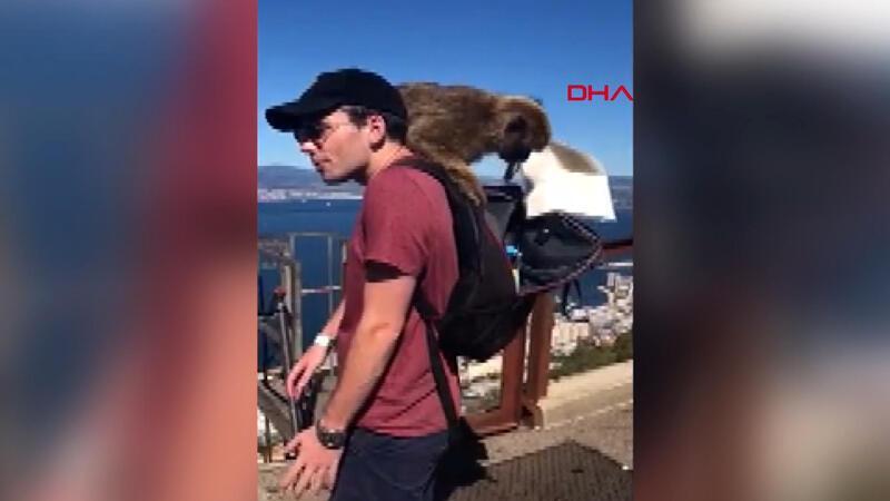 İngiltere'de genç çift hırsız maymunların gazabına uğradı
