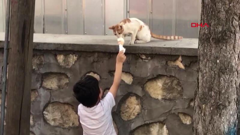 Dondurmasını kediyle böyle paylaştı