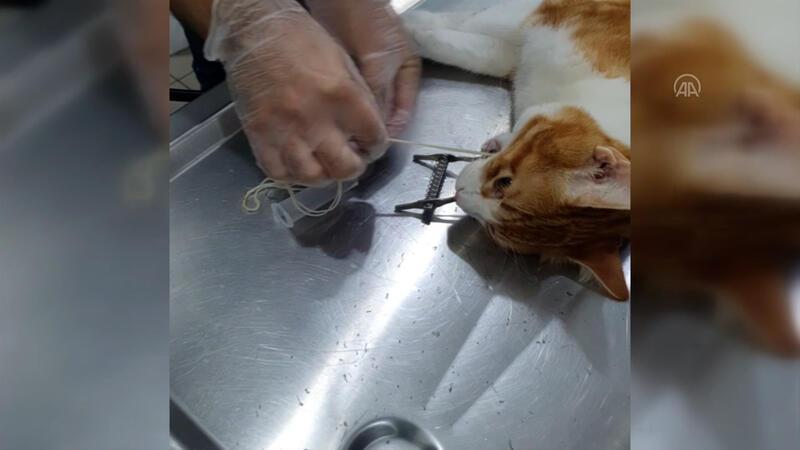 Kedinin yuttuğu iki metrelik ip endoskopiyle çıkarıldı