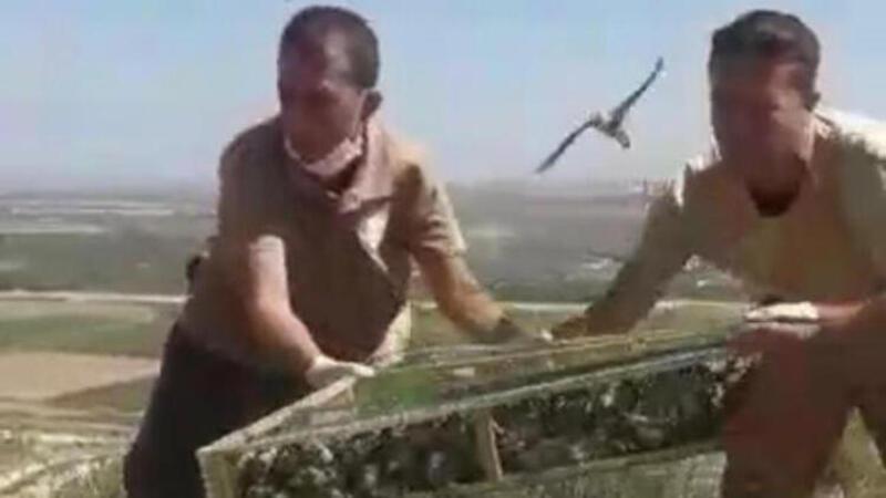 Saka kuşlarını Suriye'ye kaçırırken yakalanan kişiye 1 buçuk milyon lira ceza