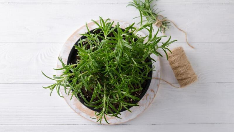 Mutfak pencerenizde yetiştirebileceğiniz 5 bitki