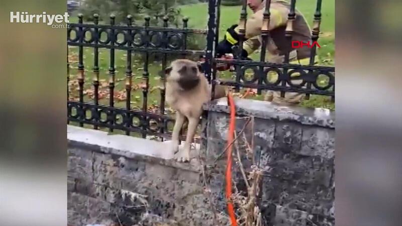 Başakşehir'de demir parmaklıklara sıkışan köpek kurtarıldı