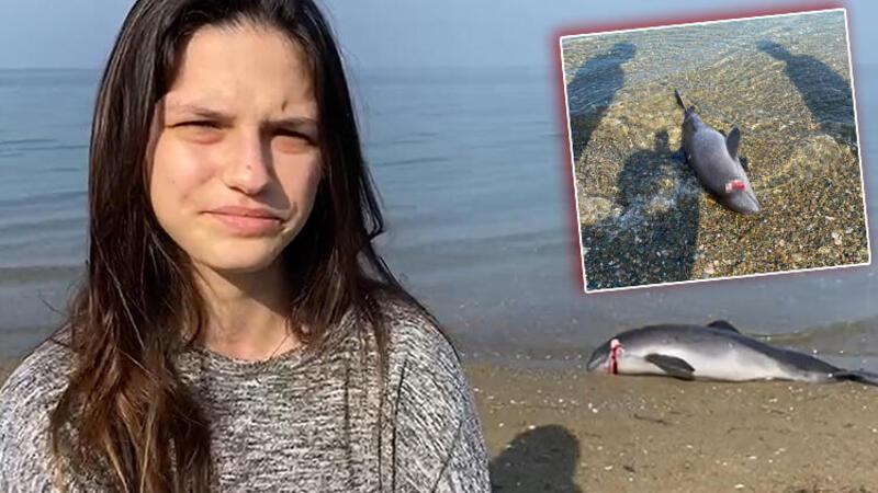 Başından vurulmuş ölü yavru yunus, sahile vurdu