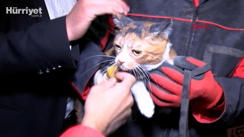 Yılmaz Erbek Apartmanı'nın enkazından arama köpeğinin bulduğu kedi, kurtarıldı