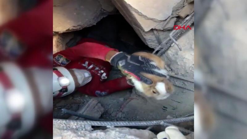 İzmir'de enkaz altından bir tavşan canlı kurtarıldı