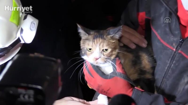 Rescue dog saves cat from debris after quake