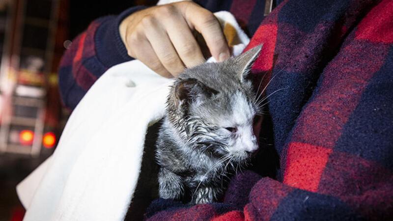 Ankara'da faciayı kedinin çıkardığı sesler engelledi