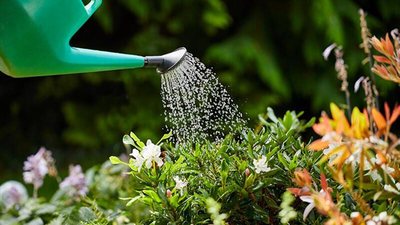Evden uzaktayken bitkilerin solmaması için ne yapılmalı?
