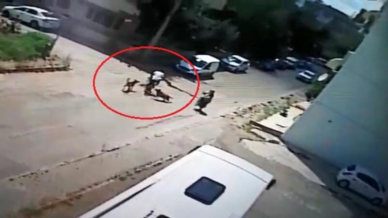 Bisiklet sürerken köpeklerin saldırısına uğrayan genç otomobille çarpıştı