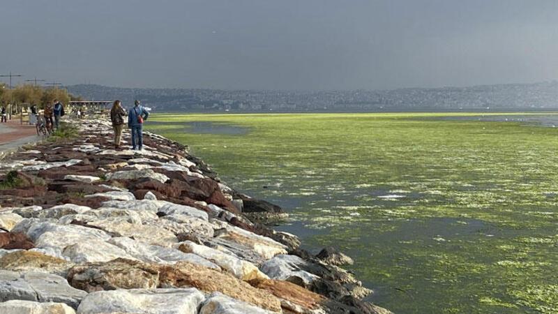 Görüntüler şaşkına çevirdi... Bostanlı sahiline deniz marulu istilası