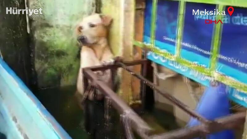 Selden kurtarılan köpeğin görüntüleri viral oldu