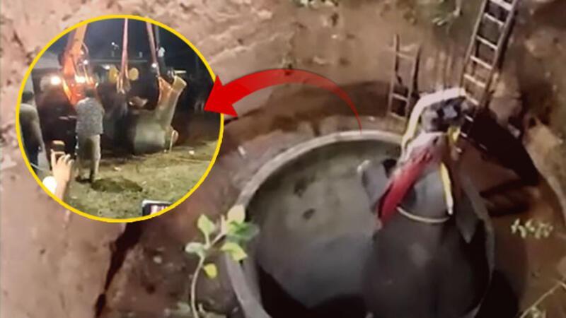 Hindistan'da 15 metrelik çukura düşen fil için seferberlik