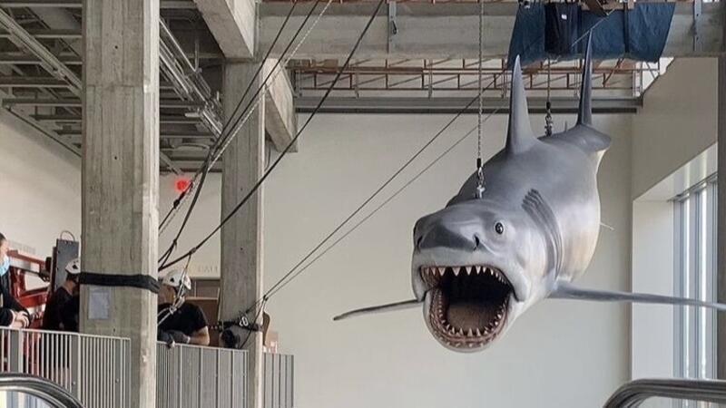 ABD'de Jaws filminde kullanılan dev köpekbalığı yenilendi