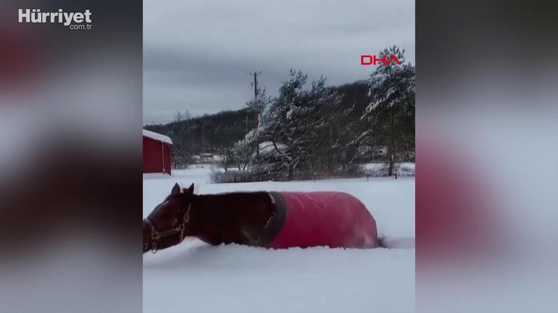 Atın, kar mutluluğu milyonlarca kez izlendi