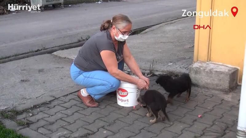 Köy köy dolaşarak sokak hayvanlarını besliyor