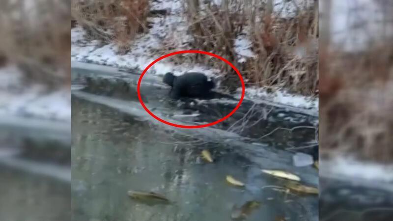 Buzun üstünde elleriyle tek tek yakaladılar! İlginç anlar kameraya yansıdı
