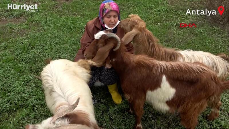 'Şehirdeki çoban' Menşure Teyze... Her gün beslemeyi ihmal etmiyor