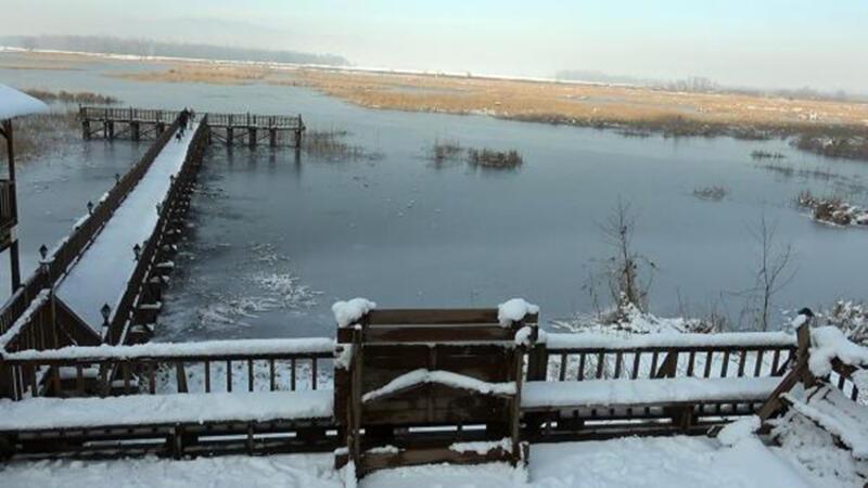 'Kuş cenneti' Efteni Gölü, buz tuttu