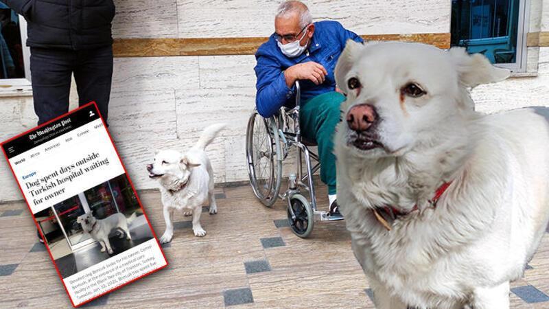 Sahibini 5 gündür hastane kapısında bekleyen 'Boncuk' dünya basınında