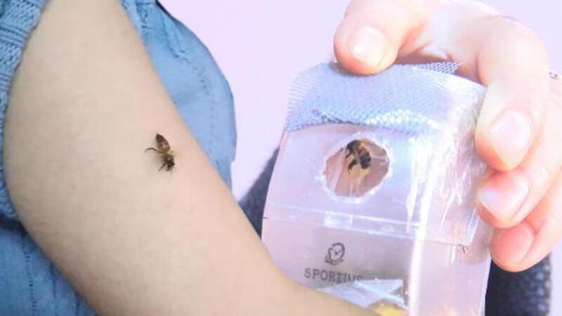 Koronavirüse iyi geldiğini öne sürüp, kendilerini arılarına ısırtıyorlar