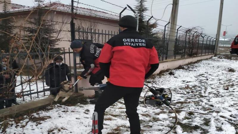 Bolu'da bahçe demirlerine sıkışan köpeği itfaiye kurtardı