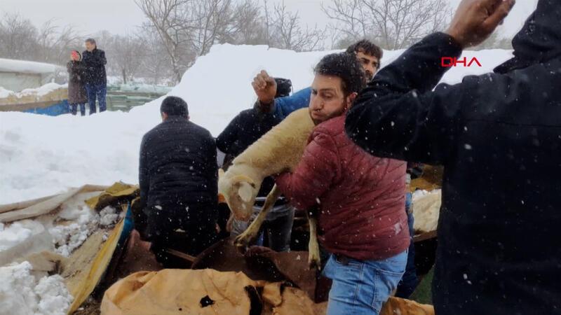 Kar nedeniyle çöken ahırdaki hayvanları kurtarmak için seferber oldular