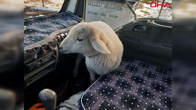 Yolda bulduğu kuzuyu önce aracında ısıttı, ardından sahibine teslim etti