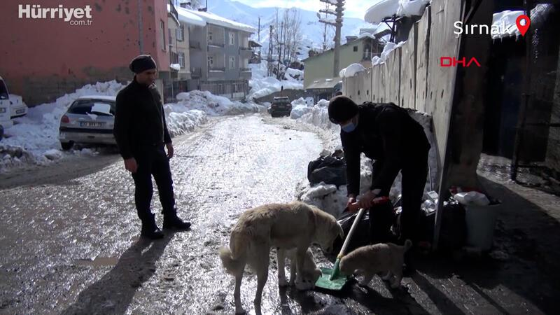 Polis ve bekçiler sokak hayvanlarıyla yemeklerini paylaşıyor