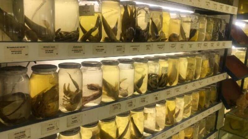 İstanbul'da çok fazla kimsenin bilmediği balık müzesinde 450'den fazla balık türü sergileniyor