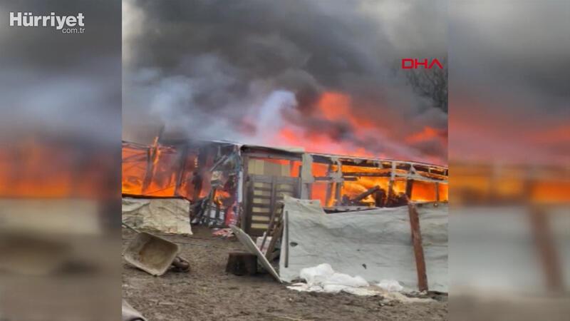 Arnavutköy'de ahırda çıkan yangında 7 koyun öldü