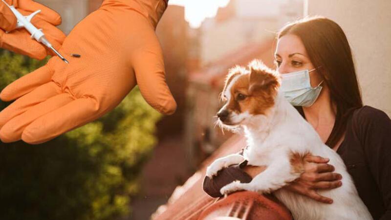 Evcil hayvanlara pasaport ve mikroçip zorunluluğu getirildi