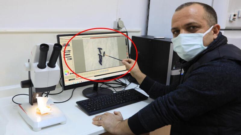 Uzman isim açıkladı: Sivrisinek koronavirüs taşımıyor
