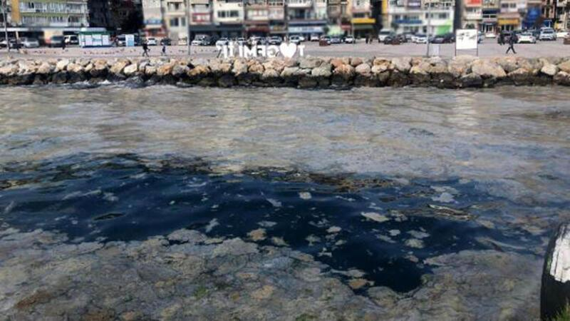 Gemlik Sahili plankton patlamasıyla beyaza büründü