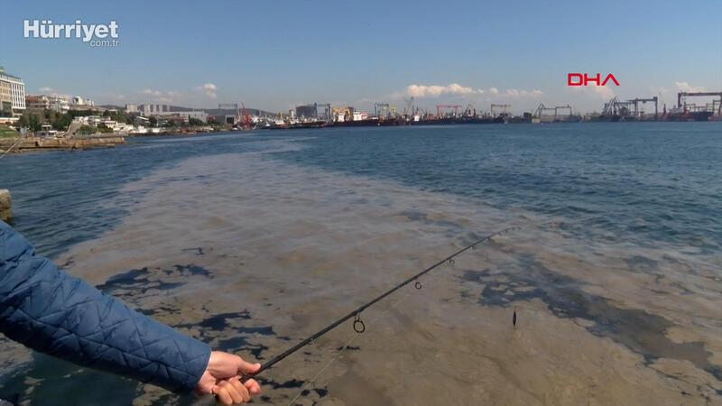 Tuzla sahilini deniz salyası kapladı