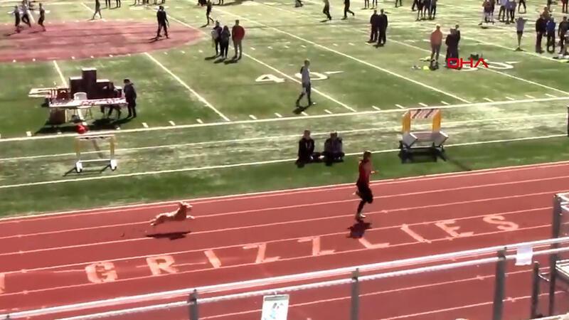 Tribünden atlayan köpek atletizm yarışmasını birincilikle bitirdi